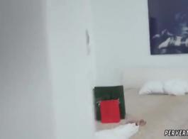 كريسي لين يغوي الديك الثابت