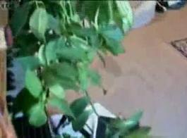 بريانا بنوك كلية مقلاع حزب