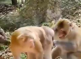 سكس تزواج الحيوانات