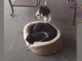 قطة في سلسلة فاتنة للضرب على أرضية النادي